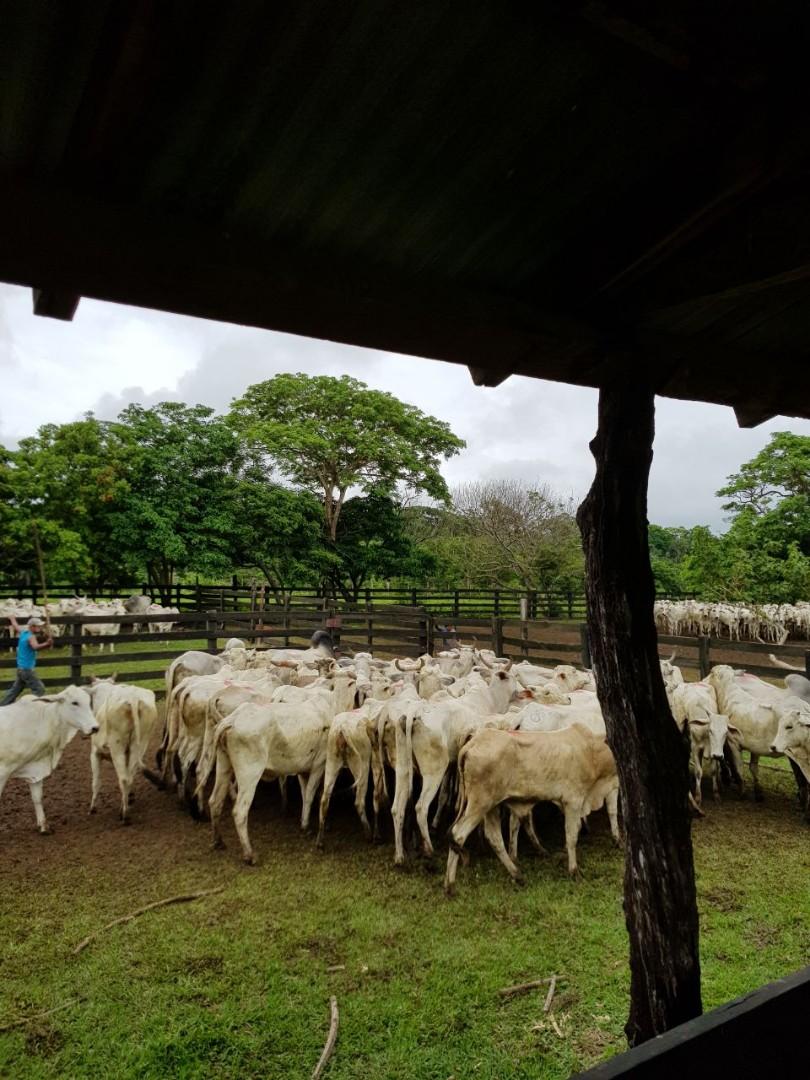 Quinta propiedad agrícola en Venta En Venta #propiedad #ganadera zona #terebinto Foto 6