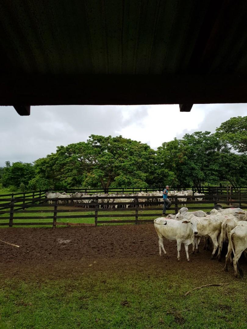 Terreno en Venta Zona terebinto a a 33 km del puente del Urubo Foto 10